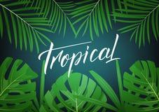 热带 与字法和回归线密林的现代设计布局离开 夏天热带异乎寻常的背景 库存图片
