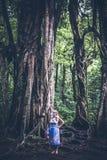 热带巴厘语风景背景的妇女,在巴厘岛北部,印度尼西亚 常设近的榕属树 图库摄影