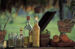 热带水果和饮料 免版税库存图片