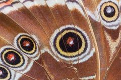 热带蝴蝶翼详细的宏指令  免版税库存照片