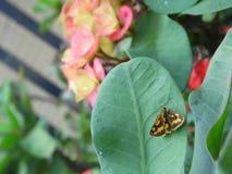 热带蝴蝶 免版税库存照片