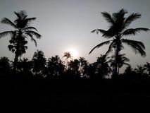 热带 库存照片
