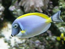 热带2条的鱼 库存照片