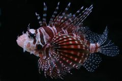 热带21条的鱼 免版税库存照片