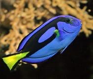 热带4条的鱼 库存照片