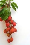 热带4的果子 图库摄影