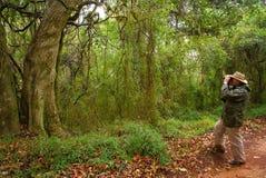 热带birdwatcher的森林 免版税库存图片