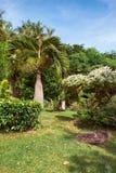 热带gargen 库存照片