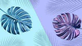 热带monstera离开与棕榈阴影在淡色 库存例证