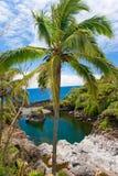 热带plam的结构树 免版税图库摄影