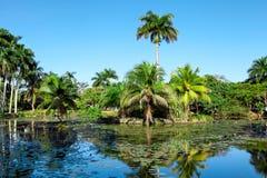 热带Playa的Larga,古巴湖附近的鳄鱼农场 免版税库存照片
