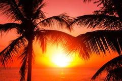热带susnet 免版税图库摄影