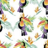 热带Toucan鸟 野生异乎寻常的动物 无缝的模式 Vect 库存例证