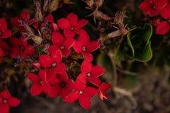 热情的红色自然 免版税库存照片