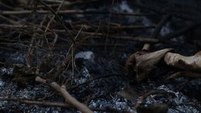 热灰和烟从篝火 热积累与全球性变暖 或者我们是这个问题的原因 股票录像