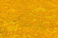 热的五颜六色的地热水池,黄石国家公园 库存图片