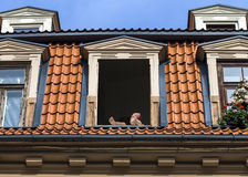 热的夏日在老里加的中心,拉脱维亚,欧洲 免版税库存照片