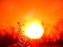 热的太阳日落 库存照片