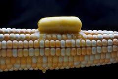 热的玉米 免版税库存图片