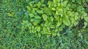 热的绿色叶子 库存图片