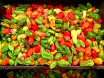 热的peper甜椒pimentones vetables 图库摄影