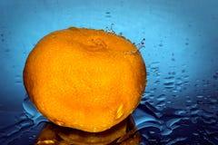 热衷的柑橘 免版税库存图片
