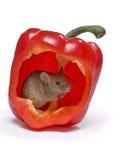 热鼠标 库存图片