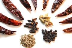 烹调印第安香料 库存照片