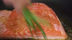 烹调和加香料三文鱼鱼用米和黄瓜 股票视频
