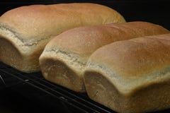 烹调在机架的新鲜的被烘烤的家制面包 库存照片