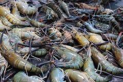 烹调在烤肉的巨型淡水Cherabin大虾 库存图片