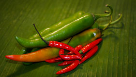 烹调成份的泰国食物 图库摄影