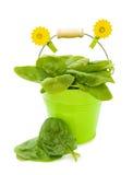 烹调新鲜的健康菠菜 库存图片