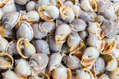 烹调海鲜的贝类 库存图片