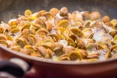 烹调烹调意大利人平底锅的蛤蜊 库存照片
