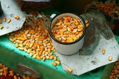 烹调玉米 免版税库存照片