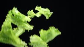烹调的新鲜的水多的年轻菜在厨房里 春天在慢动作的葱、荷兰芹和莳萝下降 影视素材