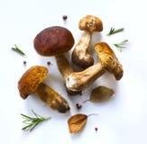 烹调背景的秋天;有机porcini蘑菇 免版税库存照片