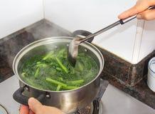 烹调Lactuca sp。 库存图片
