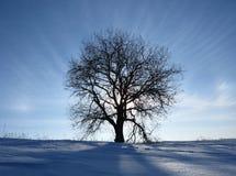 焕发结构树 库存照片