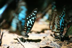 焦点和紧密蝴蝶的斑点 库存照片