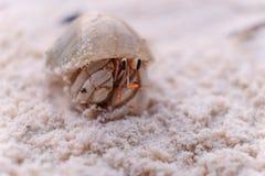 焦点在海滩的寄居蟹 免版税库存照片