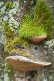 仍然森林生活 库存照片