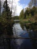 仍然池塘 免版税库存照片