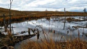 仍然秋天池塘 库存图片