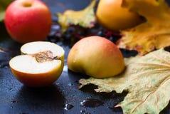 仍然秋天生活 苹果和叶子在雨中 库存图片
