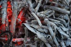 煤炭和灰在火 图库摄影