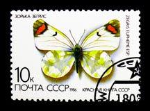 煤烟灰橙色技巧Zegris eupheme,蝴蝶serie,大约1986年 库存图片