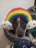 照亮您的天的彩虹doggo 免版税库存照片