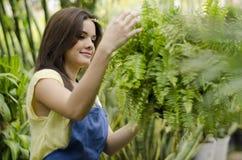 照料植物 免版税库存图片